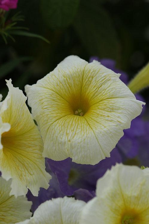 Floral lemon pie