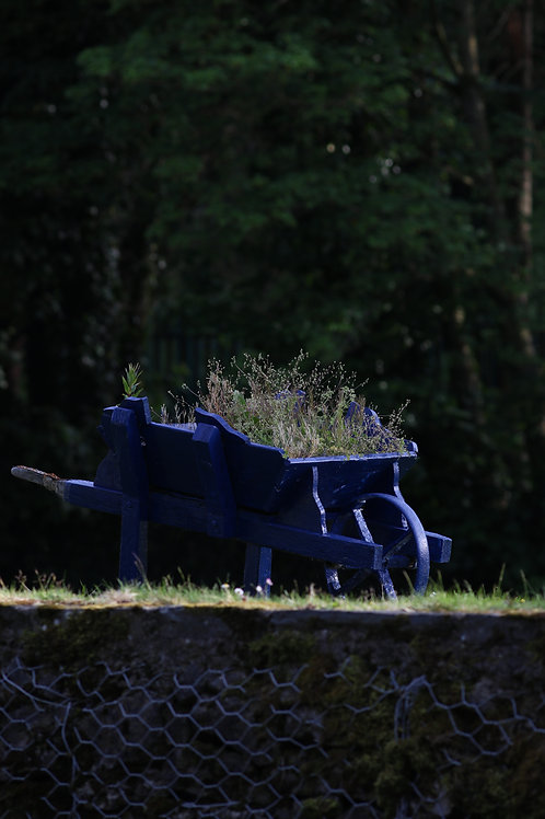 Blue wheel barrow