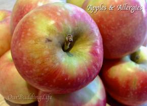 Apples & Allergies
