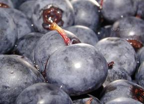 Blueberry Roundup