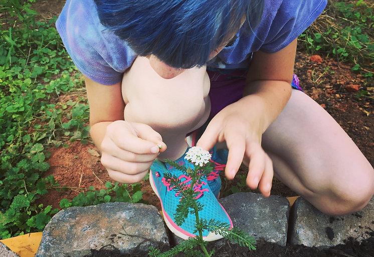 Budding herbalist