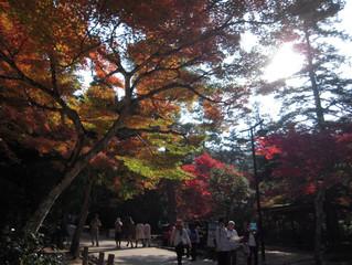 安芸の宮島は正に秋真っ盛りでした