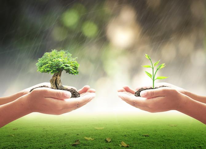 En qué se parece la historia de los dos árboles a la primera sesión de coaching de vida? 11 Tips par