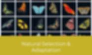 Epic ELA Lessons Topic Graphic Copy (12)