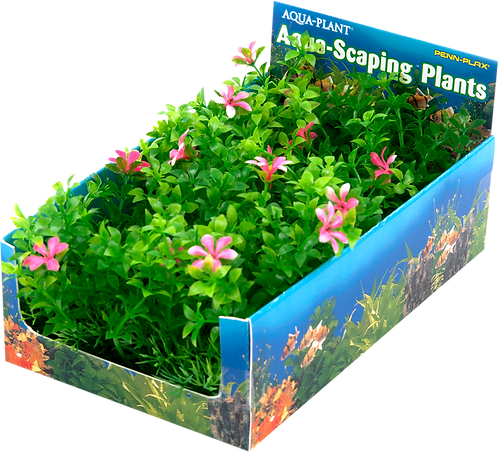 MED GREEN & PINK BUNCH PLT-5PC PDQ