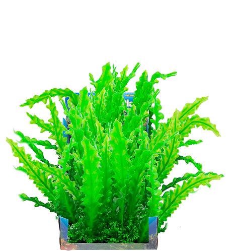 LRG WAVY EDGE SWORD BUNCH PLANT