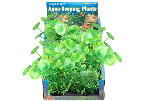 MED PENNYWORT BUNCH PLANT