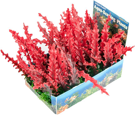 LRG RED BUNCH PLANT-5PC PDQ