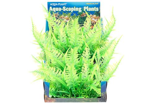 MED OSTRICH FERN BUNCH PLANT
