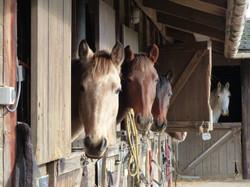 chevaux trianon