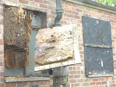 Tens of thousands of bees discovered at historic Hopwood Hall