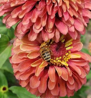 Van Houtte Farms Bee on Flower