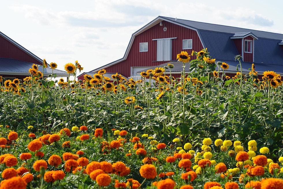 Van Houtte Farms