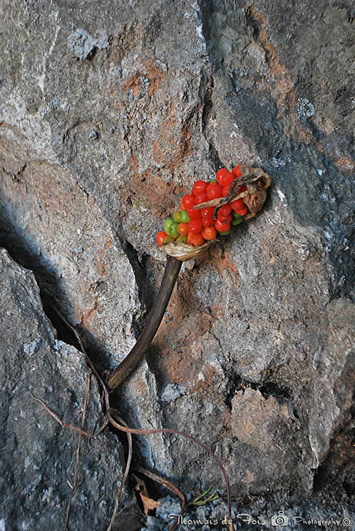 Life in a Rock
