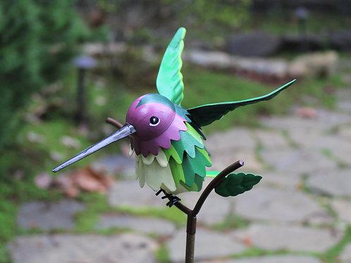 BIRD: Anna's Hummingbird