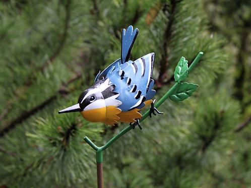 BIRD: Nuthatch