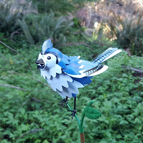 BIRD: Blue Jay