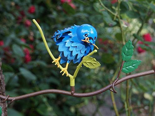 BRANCH: Mountain Bluebird