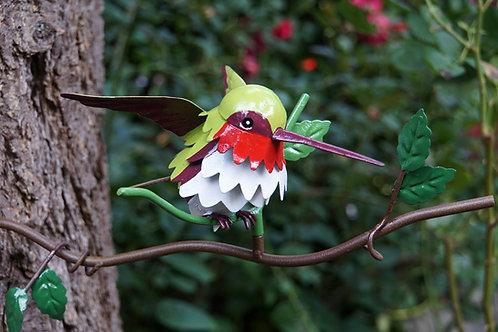 BRANCH: Ruby-throated Hummingbird