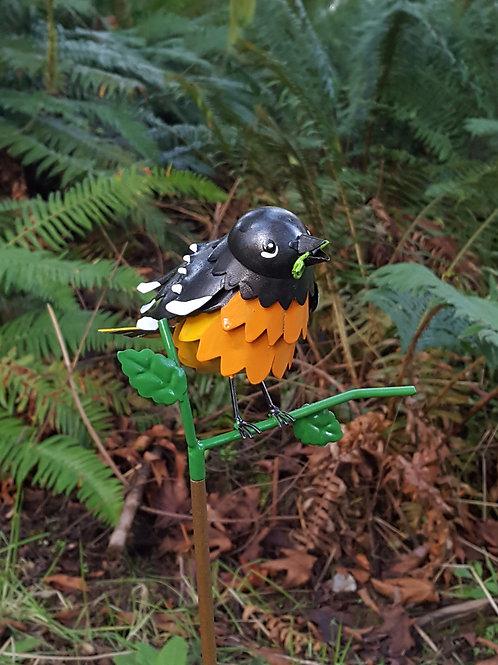 BIRD: Oriole