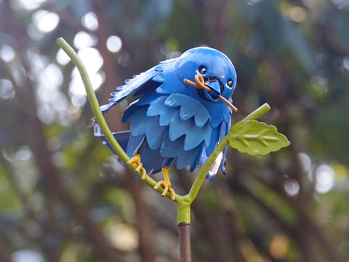 BIRD: Mountain Bluebird