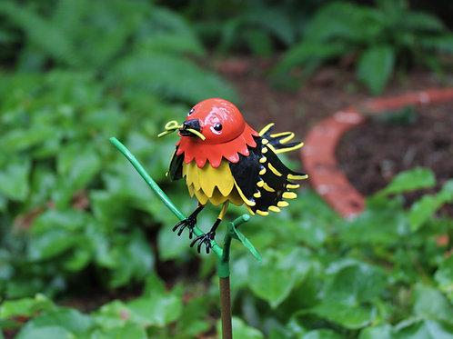 BIRD: Western Tanager