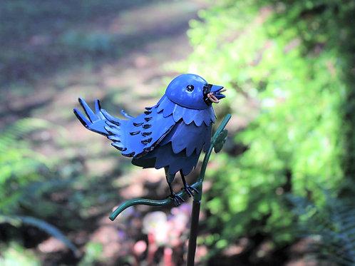 BIRD: Mountain Bluebird