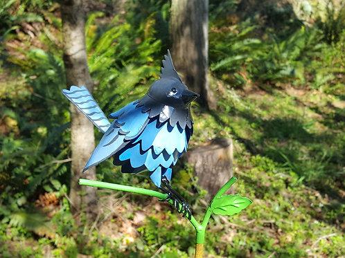 BIRD: Steller's Jay