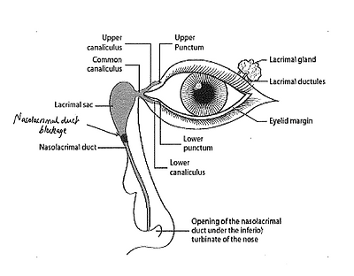nasolacrimal duct.PNG