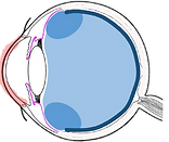 corneal conditions.png