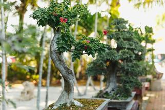 bonsai-wall3.jpg
