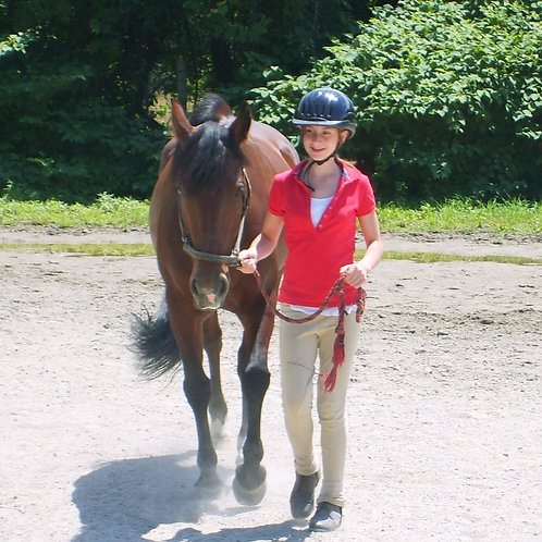 Introduction to Horses (Ages 11 -1 5) New Hampshire - April 26, 2021
