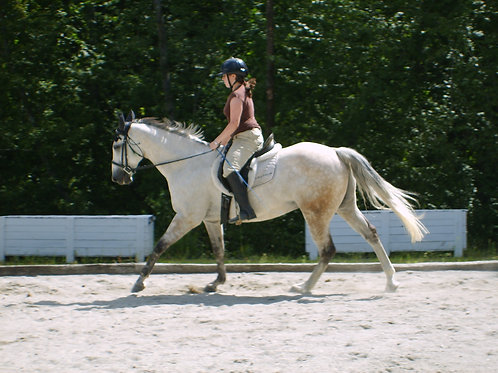 Monthly Rapid Transformational Group Coaching for Equestrians