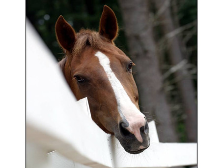 Buying the Best Horse for You (Part 1 of 3)