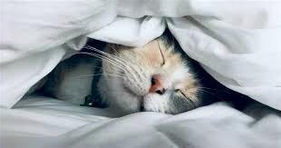 Снюсь