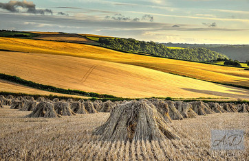 Stooks at South Molton.jpg