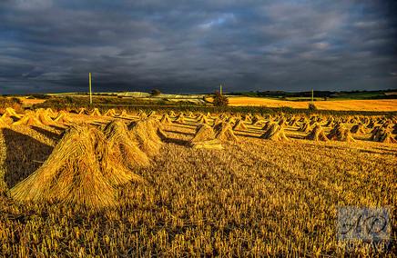 Stormy Harvest.jpg