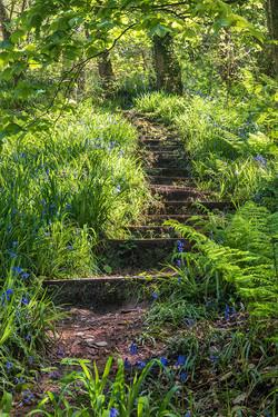 Stairway to Eden