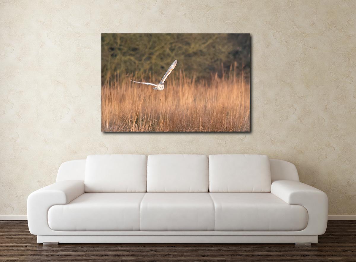 Barn Owl CanvasW