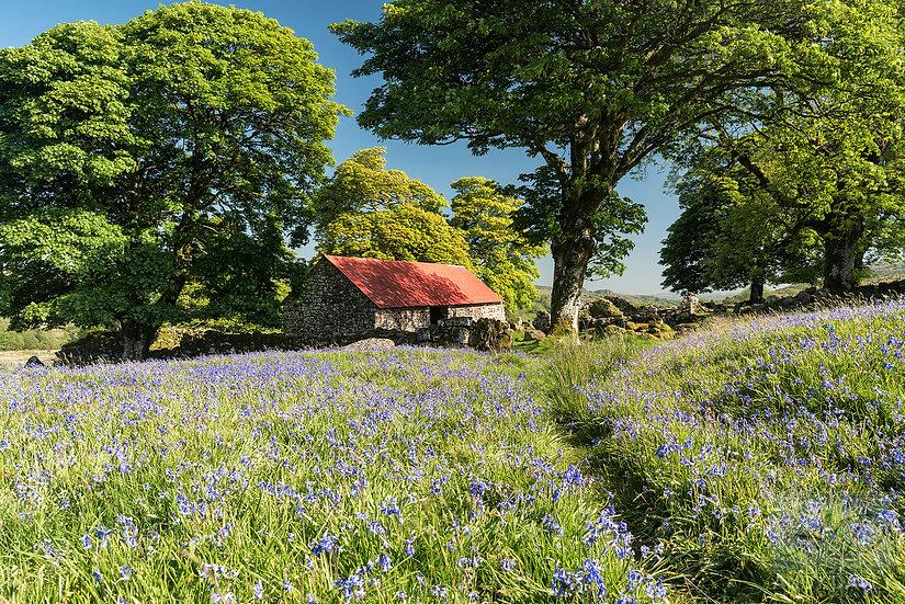 Emsworthy Mire Dartmoor