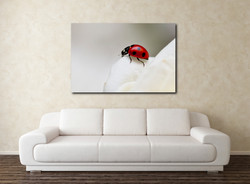 ladybirdwc1