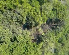 Parte do corpo do piloto e motor do avião são localizados