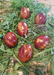 Les traditionnels oeufs de Pâques