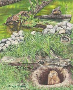 Tortoise & the Woodchuck