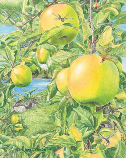 Apples of Hesperides, illustration