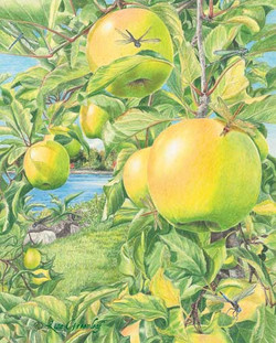 Apples of Hesperides, illustration