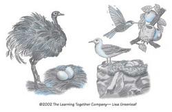 Variety birds
