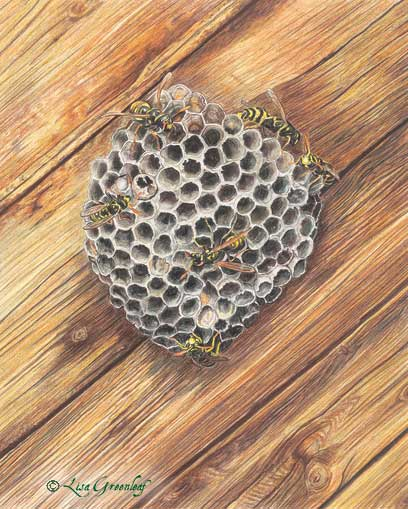 Hornets nest, book illustration