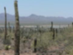 Photo_Living in the Desert.jpg