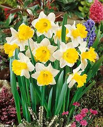 Annual Bulb Sale Charlevoix Area Garden Club
